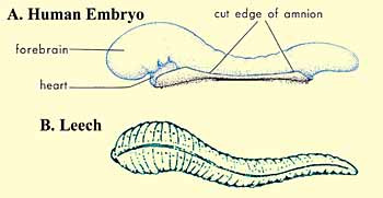 The Quran on Human Embryonic Development The_Quran_on_Human_Embryonic_Development_002